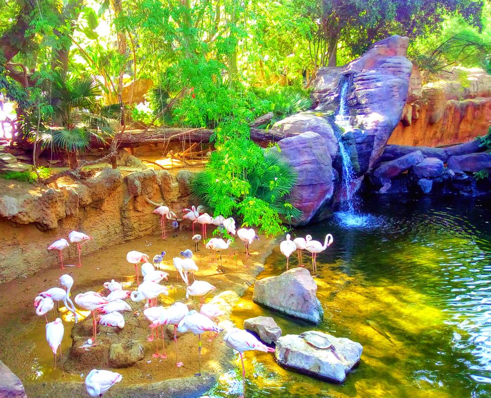 Bioparc zoo Fuengirola